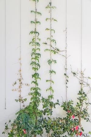 garden wire trellis vertical